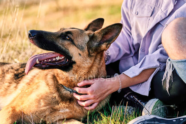 Бічний вид на власницю жінки, що сидить на газоні в парку з слухняним пухнастим німецьким псом - пастухом. — стокове фото