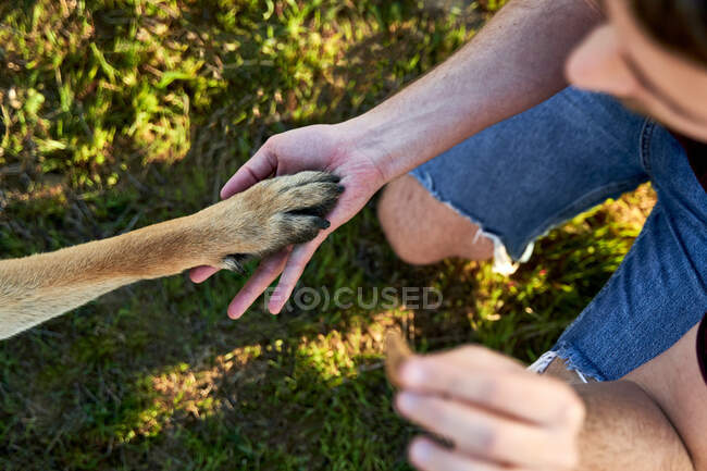 Top view of dog giving paw to male owner with piece of food while spending time in nature in summer during training — Stock Photo