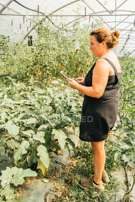 Vista laterale del giardiniere paffuto che naviga su tablet in piedi contro la piantagione con foglie lussureggianti in serra — Foto stock
