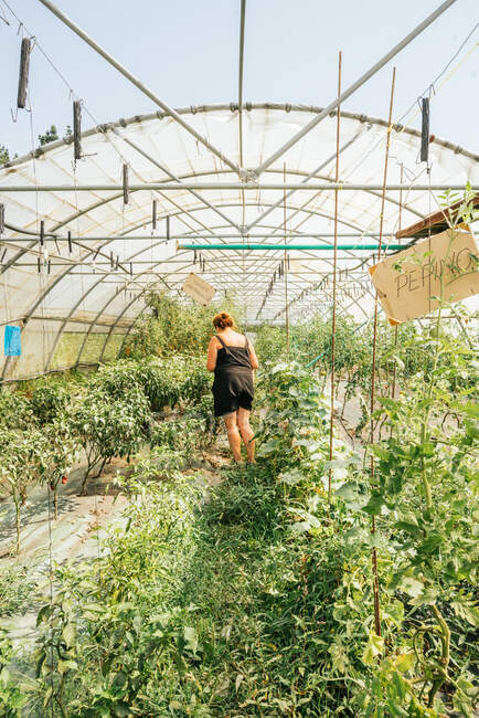 Back view of anonymous female horticulturist in hothouse with various small trees and plants under inscriptions on farm — Stock Photo