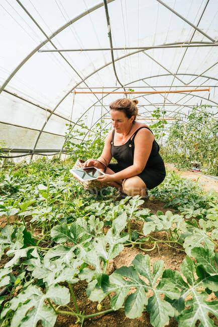 Robusto giardiniere femminile che naviga su tablet accovacciato contro piantagione con foglie lussureggianti in serra — Foto stock