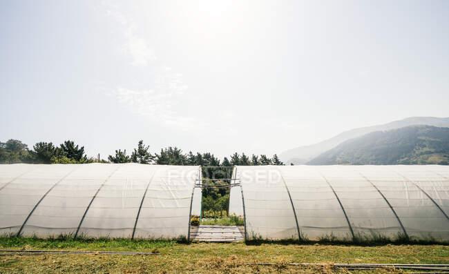 Hothouses con piante in crescita contro gli alberi e montare sotto cielo nuvoloso in campagna durante il giorno — Foto stock