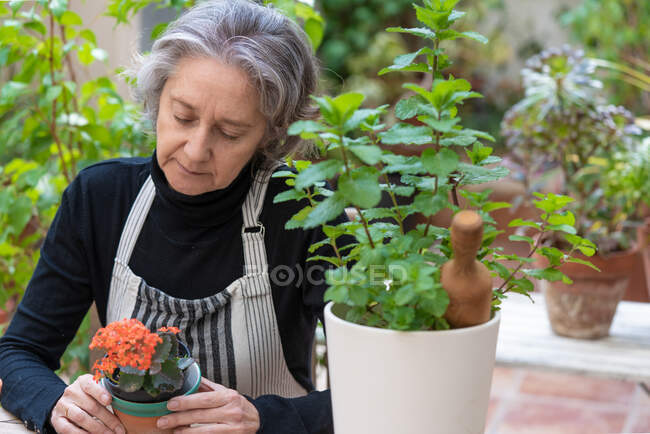 Elderly female gardener in apron sitting with blooming Kalanchoe flower in pot in garden — Stock Photo