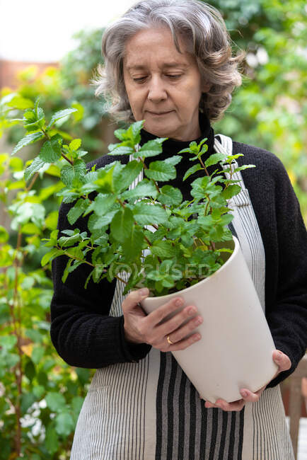 Serene senior female gardener enjoying refreshing scent of mint leaves while sitting on chair in garden — Stock Photo