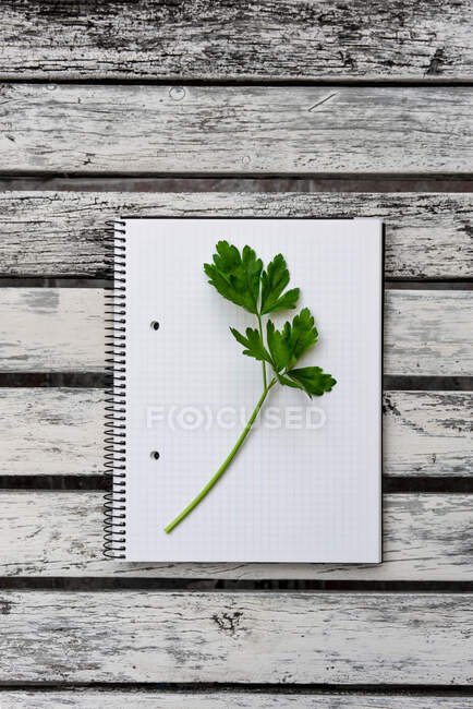 Top view of green sprig of fresh parsley placed on opened notepad with blank pages on wooden table — Stock Photo