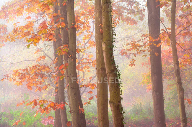 Picturesque scenery of autumnal wood with colorful foliage trees during fall season — Stock Photo