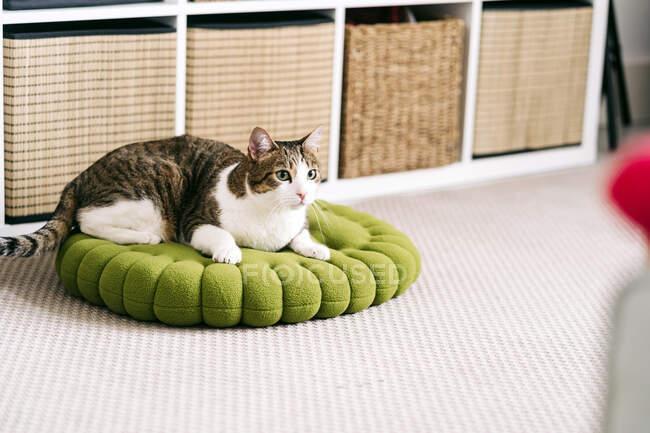 Adorable gato con piel marrón y blanca acostado en una pila de alfombras surtidas mientras mira hacia otro lado en casa - foto de stock