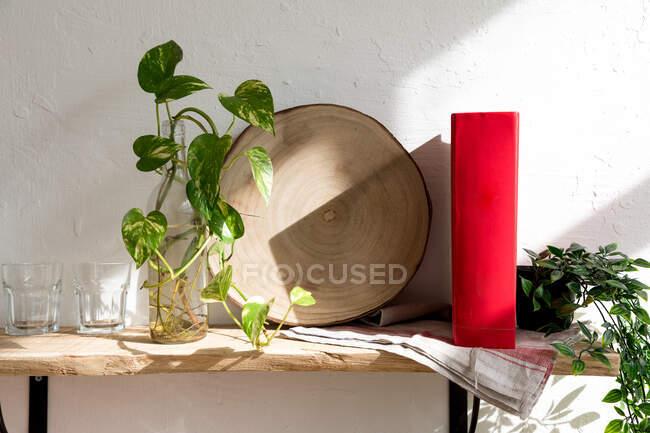 Plántulas verdes de planta de interior colocadas en botella de vidrio con agua en estante de madera con libro cerca de la pared blanca en la cocina - foto de stock