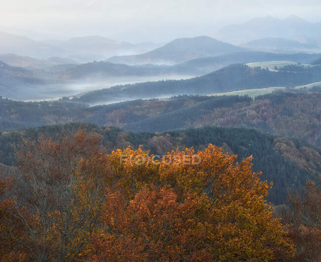 Drone view of picturesque scenery of trees with colorful foliage growing in forest in fall — Stock Photo