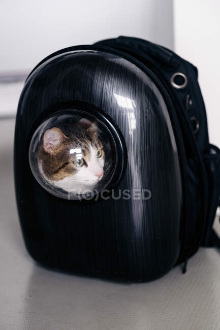 Adorable cat sitting in black backpack carrier with round shaped window and looking away in house — Stock Photo