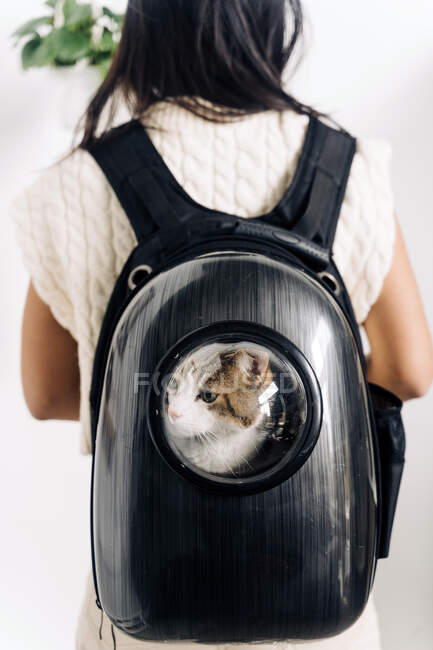 Back view of crop anonymous female owner with charming cat in backpack carrier in house — Stock Photo
