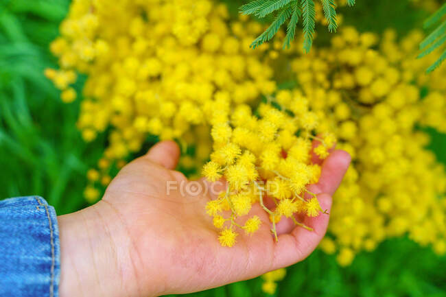 Crop anonymous kid touching blossoming shrub with yellow flowers growing in park in daytime — Stock Photo