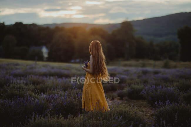 Vista lateral da fêmea gentil com flores na mão em pé no campo de lavanda florescente e desfrutando da natureza enquanto olha para longe — Fotografia de Stock