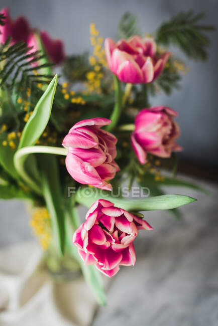 Blossoming pink flowers with gentle petals and green leaves in vase on gray background — Stock Photo