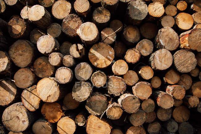 Fond texturé de bois de chauffage coupé en rangs avec une surface inégale et des branches de plantes vertes à la lumière du jour — Photo de stock