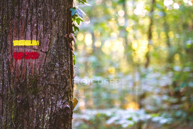 Hiking red and yellow signs drawn on tree trunk in abundant summer garden — Stock Photo