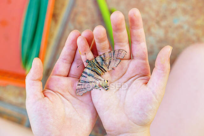 Top view of an anonymous girl holding a butterfly in her hands — Stock Photo
