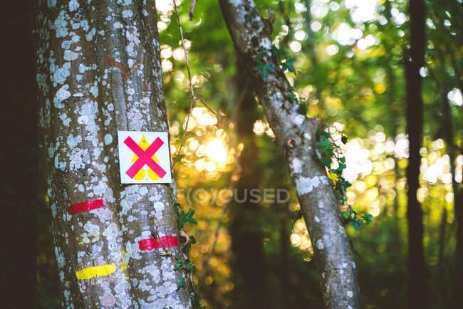 Senderismo señales rojas y amarillas dibujadas en el tronco del árbol en abundante jardín de verano - foto de stock