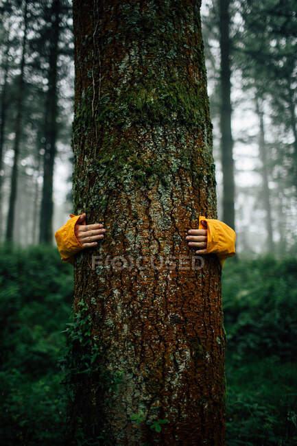 Crop unrecognizable tourist embracing tree with dry rough bark during trip in woods on blurred background — Stock Photo
