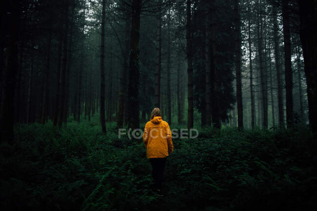Unrecognizable tourist in outerwear standing on pathway among plants and high trees in forest — Stock Photo