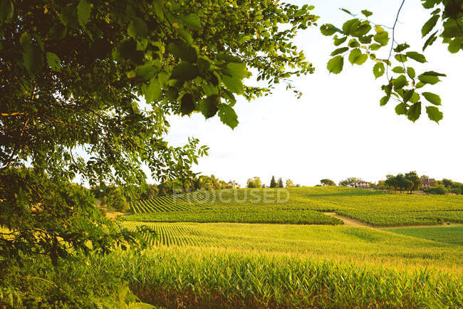 Picturesque scenery of abundant green fields cultivated on spacious fertile land in peaceful countryside on clear summer day — Stock Photo
