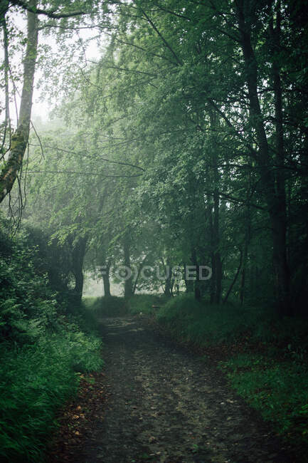 Natural landscape with narrow trail going through lush green bushes and tall trees — Stock Photo