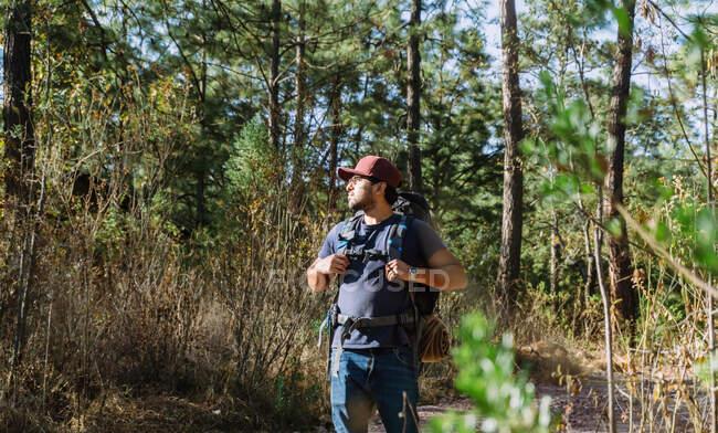 Barbuto zaino in spalla maschile in berretto passeggiando tra alberi e piante nei boschi nella giornata di sole — Foto stock