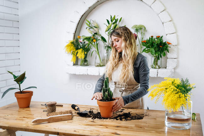 Concentrated young female florist with long blond hair in apron using brush and shovel while planting cactus in pot standing at wooden table in flower shop — Stock Photo