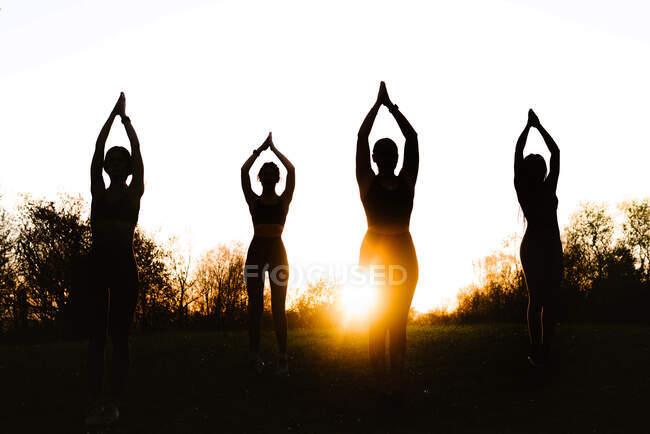 Компания сильных женщин, балансирующих в позе дерева и практикующих йогу вместе на лужайке в парке на закате — стоковое фото