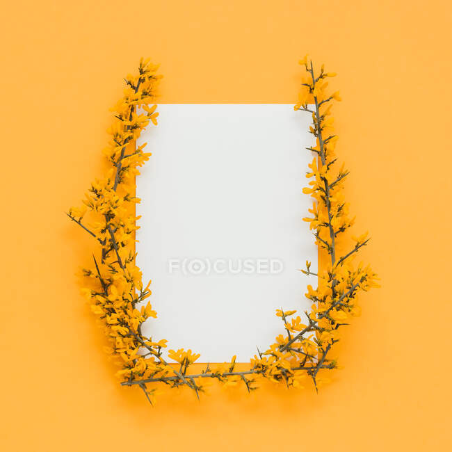 Yellow blooming branches and stems making frame on orange background — стоковое фото