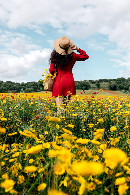 Back view anonymous trendy female in red sundress and handbag standing on blossoming field with yellow and red flowers and touching hat on warm summer day — Stock Photo