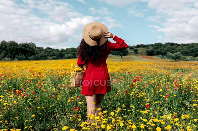 Visão traseira fêmea na moda anônimo em sundress vermelho e bolsa de pé no campo florescente com flores amarelas e vermelhas e chapéu tocante no dia quente de verão — Fotografia de Stock