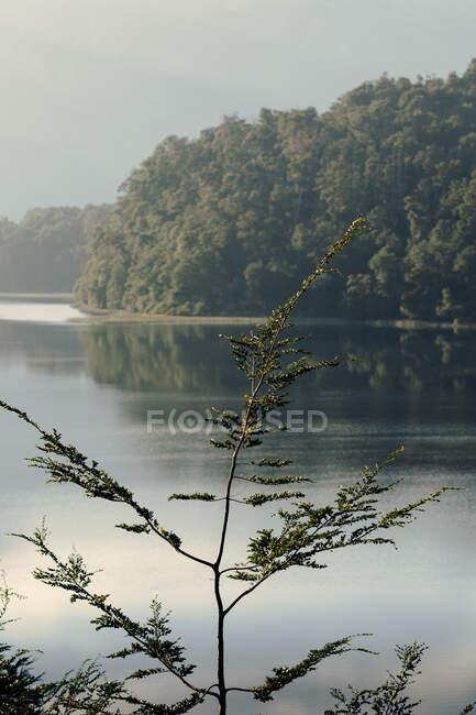 Espectacular paisaje de cordillera con bosque verde situado cerca de lago tranquilo con agua ondulada - foto de stock