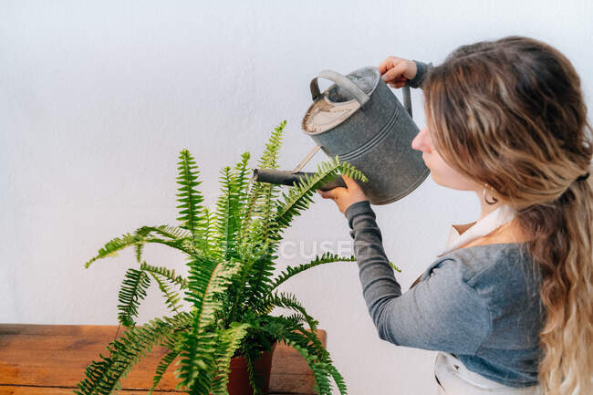 Side view of tranquil young female gardener with long wavy hair in casual clothes and apron watering potted fern plant placed on wooden table — Stock Photo