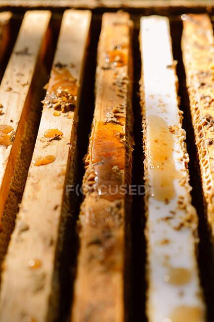 Fechar-se de quadros de favo de mel de madeira com baixas de mel e cera em apiário — Fotografia de Stock