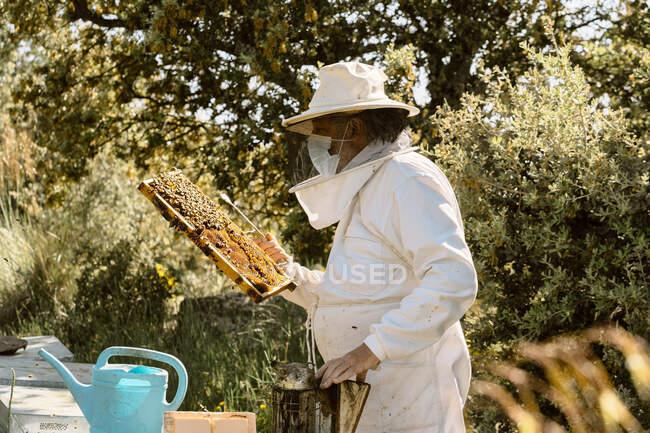 Apicultor masculino em traje protetor e máscara facial examinando favo de mel com abelhas enquanto trabalhava em apiário no dia ensolarado de verão — Fotografia de Stock
