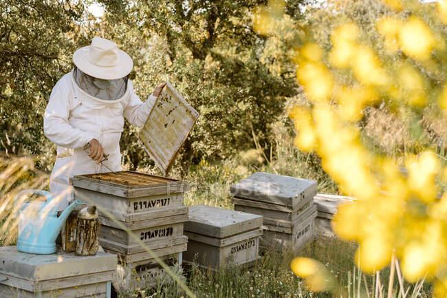 Apicultor irreconhecível em desgaste protetor inspecionando colmeias de madeira enquanto trabalhava com abelhas no dia de verão no apiário — Fotografia de Stock