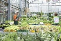 Male gardener working in greenhouse — Stock Photo