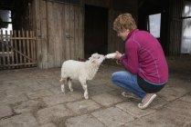 Femme alimentation agneau avec bouteille — Photo de stock