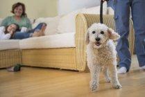 Hund ist bereit für Gassi gehen — Stockfoto