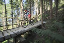 Катание на горном велосипеде по пешеходному мосту через лес — стоковое фото
