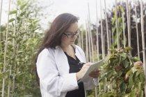 Scientifique inspectant les plantes en serre — Photo de stock