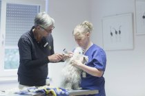 Veterinarians doing check-up on dog — Stock Photo