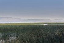 Herbe par lac avec montagne — Photo de stock