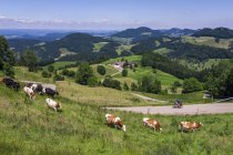 Biker Solo Fahrrad Road trip — Stockfoto