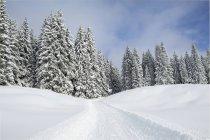 Gatto delle nevi traccia sulla neve da alberi — Foto stock