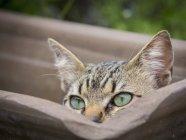 Закри домашньої кішки ховається в порожній Рослини горшкові — стокове фото