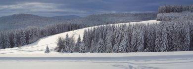 Malerische Aussicht auf Ski verfolgen Thurnerspur in Schwarzwald Bergen, Baden-Wurttemberg, Deutschland — Stockfoto
