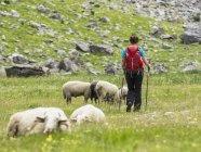 Escursionista femminile che scende sul pascolo ovino nella valle dell'Ossoue negli Alti Pirenei, Francia — Foto stock