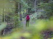 Femme de randonnée en forêt-noire, Bad Wildbad, Bade-Wurtemberg, Allemagne — Photo de stock